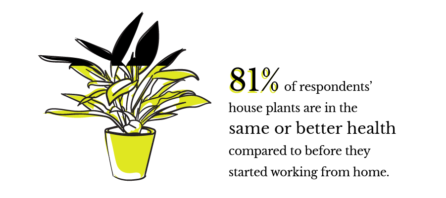 81% of respondents' house plants are in the same or better health compared to before they started working from home.
